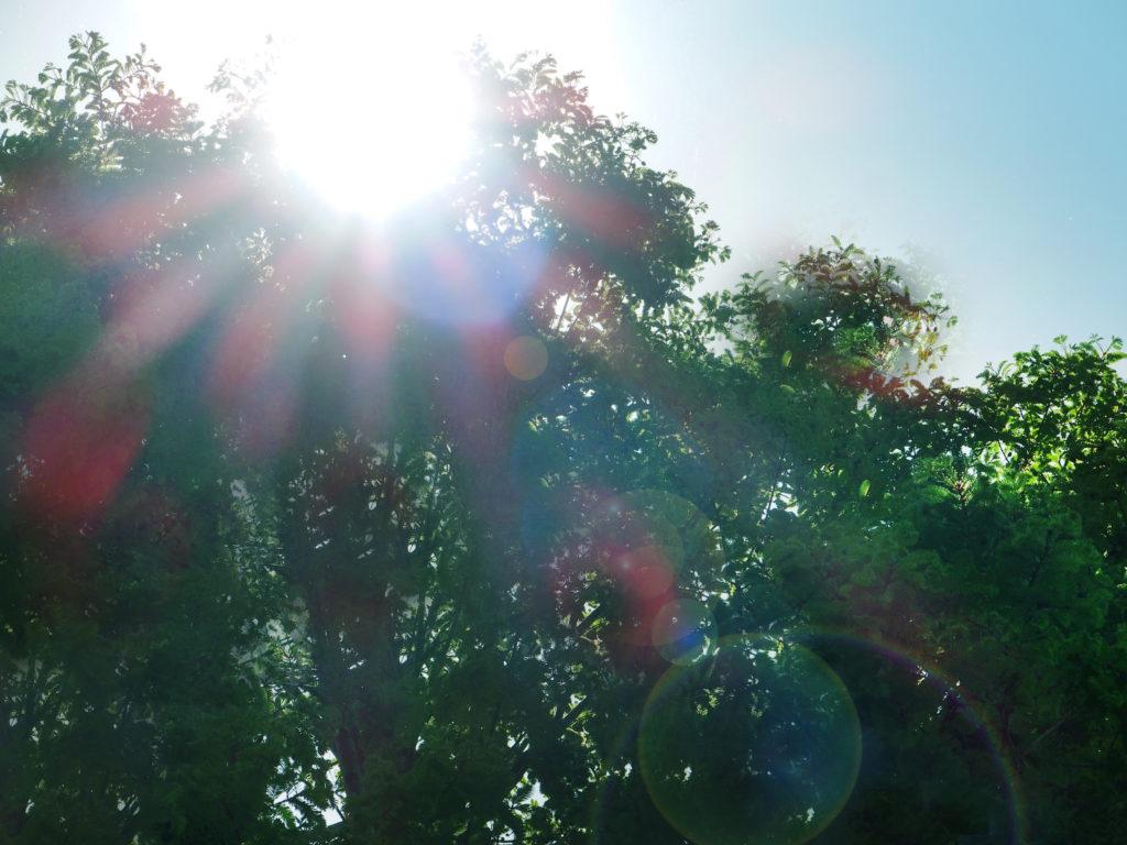 紫外線対策でAGA予防
