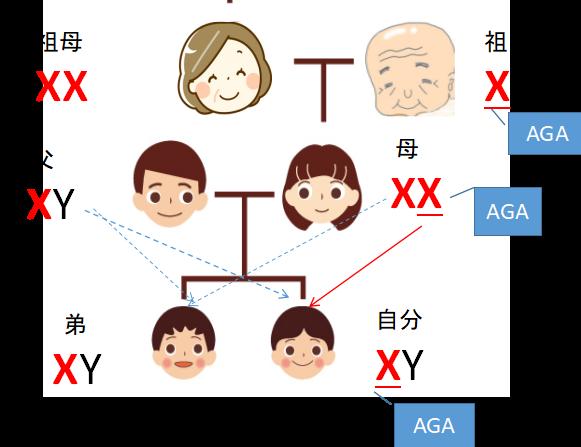 AGA遺伝家系図