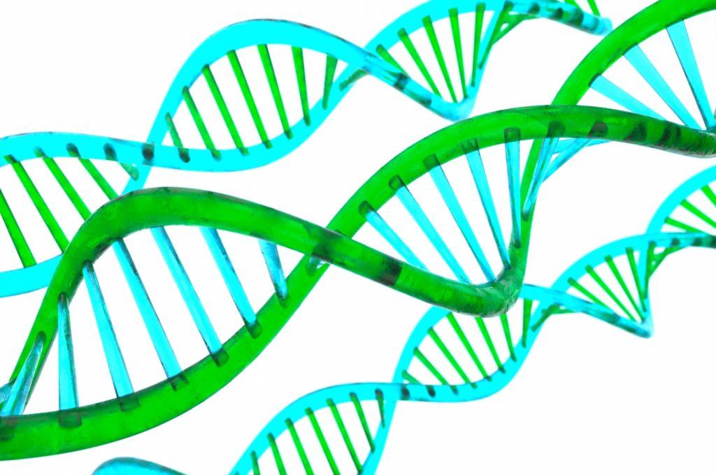 AGA原因遺伝